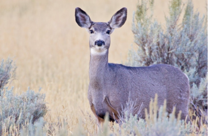 Is Rocky Flats National Wildlife Refuge Safe? The Science Says Yes - blog post image